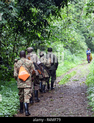 Guides and armed rangers walk along a track in the Bwindi Impenetrable National Park, Bwindi,  Uganda. - Stock Image