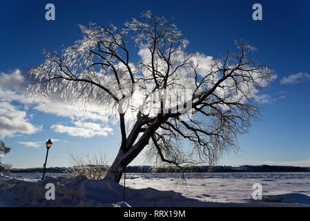 A tree covered in ice after freezing rain glowing in the sun in Quebec, Canada with the St Lawrence river beyond - Stock Image