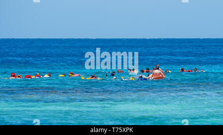 Roatan is a very popular destination for diving and snorkelling.  Here a group snorkels in West Bay Honduras. - Stock Image