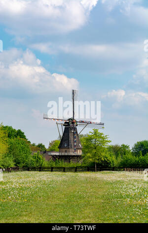 Old wind mill, blue sky and pasture with wild blossoming flowers, Dutch countryside landscape - Stock Image