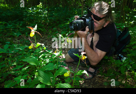 Photography nature photographer photographing Lady's slips orchids Sweden - Stock Image