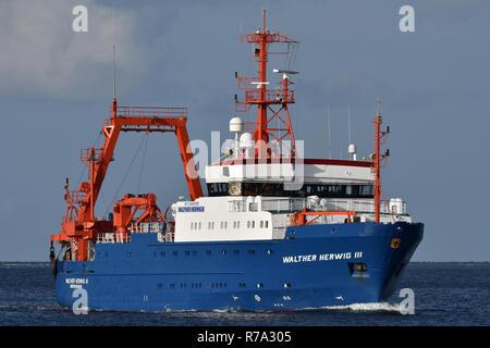 Fishing Support Vessel Walther Herwig III - Stock Image