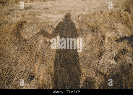 Shadow of woman on hay covered field during sunny day - Stock Image