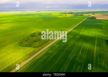 Bright green fields of Belarus sown with wheat. Aerial view - Stock Image