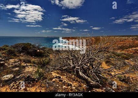 Gnarled and rugged coast of Kalbarri National Park in Western Australia - Stock Image