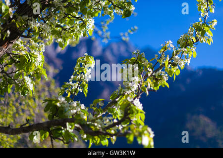 Closeup View Mountains Hiking Himalayas.Beautiful End Summer Season Background.Horizontal Photo.Green Three Cloudy - Stock Image