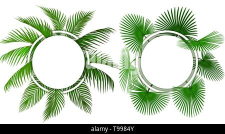 Two kinds of green tropical palm leaves. Place for advertising, announcements. illustration - Stock Image