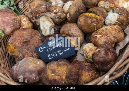 Porcini/Ceps fresh organic mushrooms on interior display in rustic basket priced at £78.80 pr kilo at speciality high quality delicatessen in Borough Market Southwark London UK - Stock Image