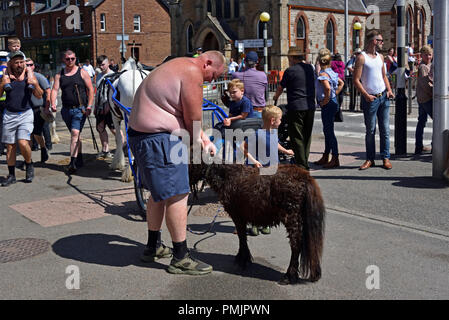 Obese Gypsy Traveller with miniature pony. Appleby Horse Fair 2018. The Sands, Appleby-in-Westmorland, Cumbria, England, United Kingdom, Europe. - Stock Image