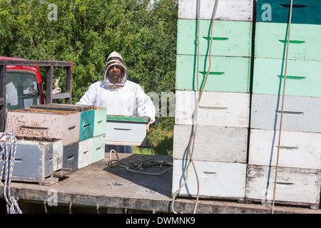 Beekeeper Loading Honeycomb Crate In Truck - Stock Image