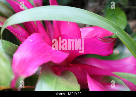 Colorful close up images of flower. - Stock Image
