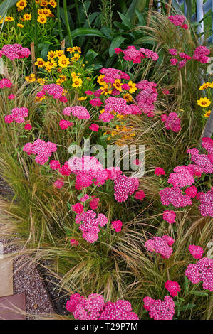 A colourful flower border with flowering Achillea milefoiu apfelbute and stipa grass - Stock Image