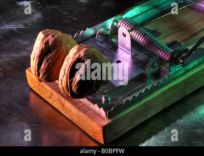 Rat trap ready to crush nuts - Stock Image