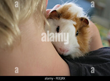 Pet guinea pig peering over young child's shoulder. - Stock Image