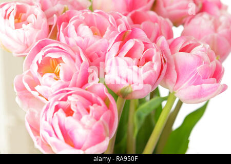 Tulip flower bouquet in shades of pink against white, nostalgic and romantic background template for florists or greeting cards - Stock Image