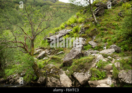 Looking back to the rocky fern clad lower slopes of Meall Cumhann in Glen Neivs - Stock Image