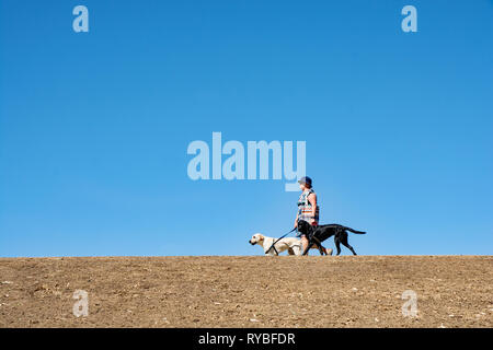 Lady walking two large dogs along an embankment, Bicentennial Park, Peel River Tamworth NSW Australia. - Stock Image