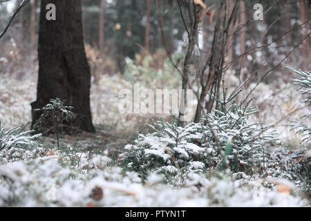 Winter forest. Landscape of winter forest on a sunny day. Snow-covered trees and Christmas trees in the forest. Branches under the snow. Bad snowy wea - Stock Image