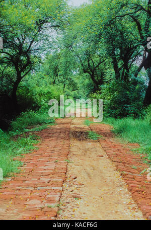footpath in Keoladeo Ghana National Park or Bharatpur Bird Sanctuary, Bharatpur, Rajasthan, India - Stock Image