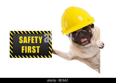 frolic smiling pug puppy dog with yellow constructor helmet, holding up black and yellow safety first sign board, isolated on white background - Stock Image