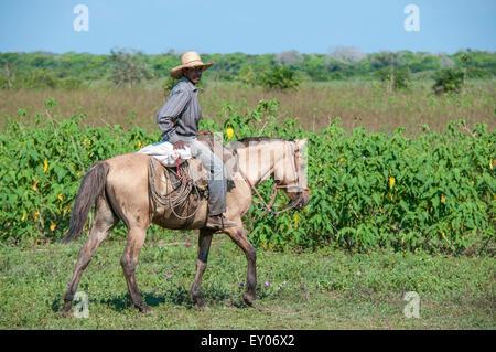 Brazilian Cowboy riding a Pantaneiro horse on a cattle ranch in the Pantanal, Mato Grosso, Brazil, South America - Stock Image