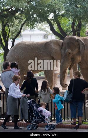 Elephants at the zoo - Stock Image