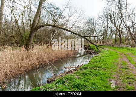 fallen tree over a river - Stock Image