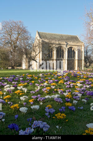 Minster Library in spring Dean's Park York North Yorkshire England UK United Kingdom GB Great Britain - Stock Image