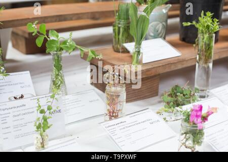 Wildflower samples on display at the Wildflower Festival at Mount Pisgah Arboretum in Eugene, Oregon, USA. - Stock Image