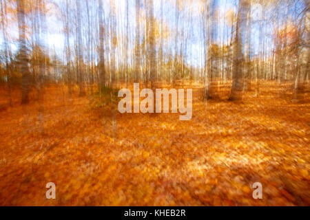 Motion blur of a woodlot in autumn after most of the leaves have fallen to the ground. - Stock Image