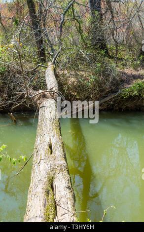 Tree Down Over Creek - Stock Image