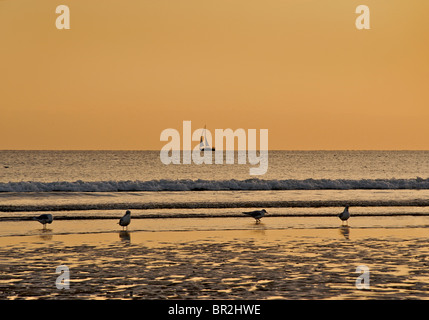 Sunset on Brighton beach lat low tide, Brighton & Hove, East Sussex, England - Stock Image