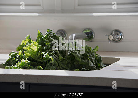 Lettuce in kitchen sink - Stock Image