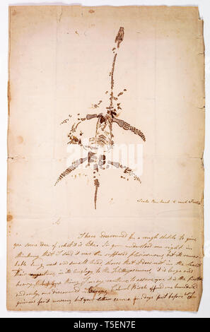 Letter concerning the discovery of Plesiosaurus dinosaur fossil, from Mary Anning, December 26th, 1823 - Stock Image