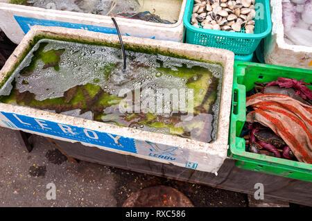 A fishmongers market stall with seafood on display, Hanoi, Vietnam - Stock Image