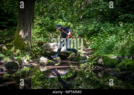 Hiker crossing stream in forest - Stock Image