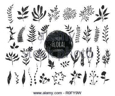 Collection of hand drawn floral elements - Stock Image