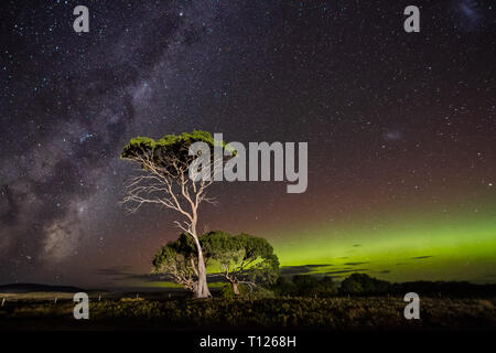 Aurora Australis or Southern Lights and the Galactic Centre of the Milky Way behind gum trees. - Stock Image