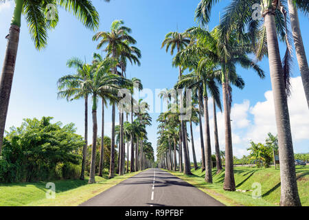 Capesterre Belle eau, Guadeloupe, French West Indies, famous royal palm( roystonea regia )fringed road named  Dumanoir alley. - Stock Image