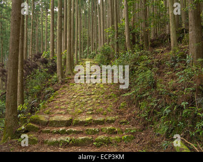 Kumano Kodo Pilgrimage Trail in the forest near Kusu-no-Kubo  south of Koguchi, Kii Peninsula, Wakayama Prefecture, - Stock Image