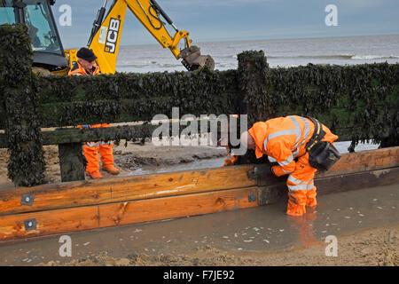 repairing wooden groyne beach walton naze essex - Stock Image