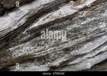 Close up of sandy driftwood on the beach. - Stock Image