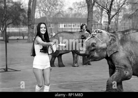 Strange tales of London. Beauty Queens (who will be in the pancake race on Tuesday) and baby elephant Minoti - she is five, but for an elephant that is a baby. February 1975 75-00776-006 - Stock Image