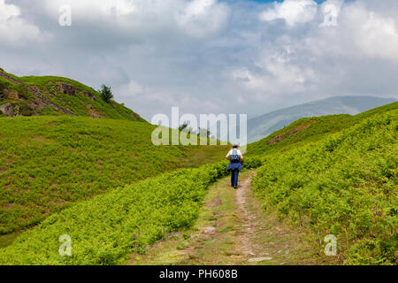 Female hiker in the Cumbrian Mountains, near Langdale and Elterwater, Lake District National Park, UK - Stock Image