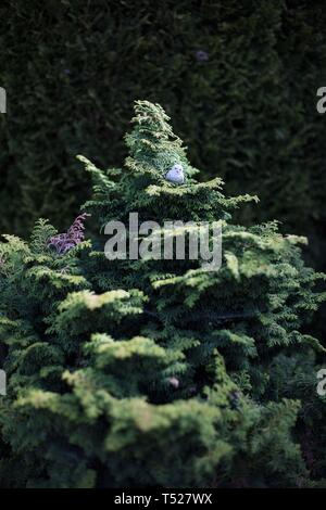 A tiny ceramic owl in an evergreen tree at the Oregon Garden in Silverton, Oregon, USA. - Stock Image