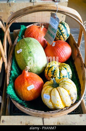 Assorted priced Squashes for sale in a greengrocers shop in North Yorkshire in autumn with prices - Stock Image