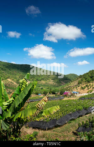 rural valley landscape with organic pepper farm near kampot cambodia - Stock Image