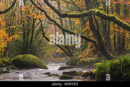 Autumn foliage surrounds the River Teign near Fingle Bridge, Dartmoor, Devon, England. Autumn (November) 2017. - Stock Image