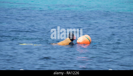 Diving lady of Jeju in action. Women swimming to next spot, before heading back under again - Stock Image