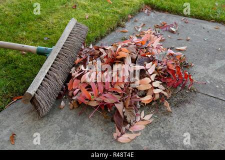 Conceptual image of Autumn leaves and a brush on a garden path - Stock Image